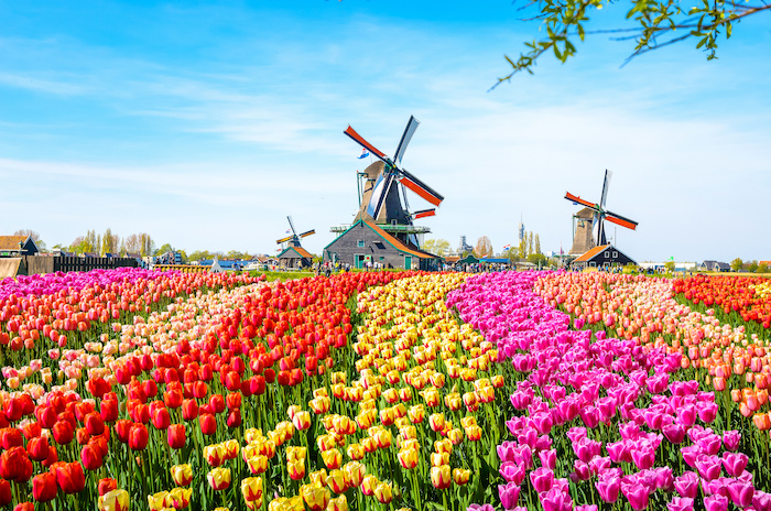 Travel Insurance for the Netherlands